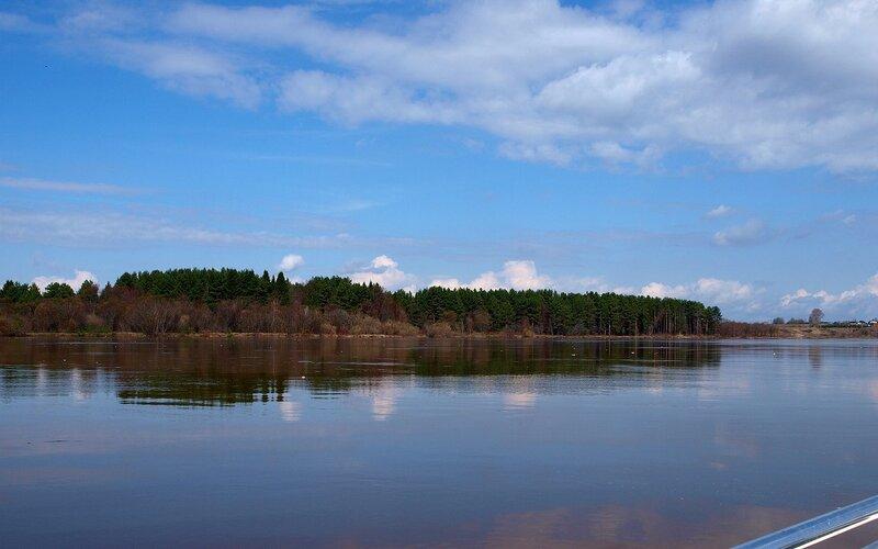 Сосновый лес на другом берегу P4260963