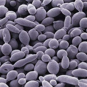 питание микробов