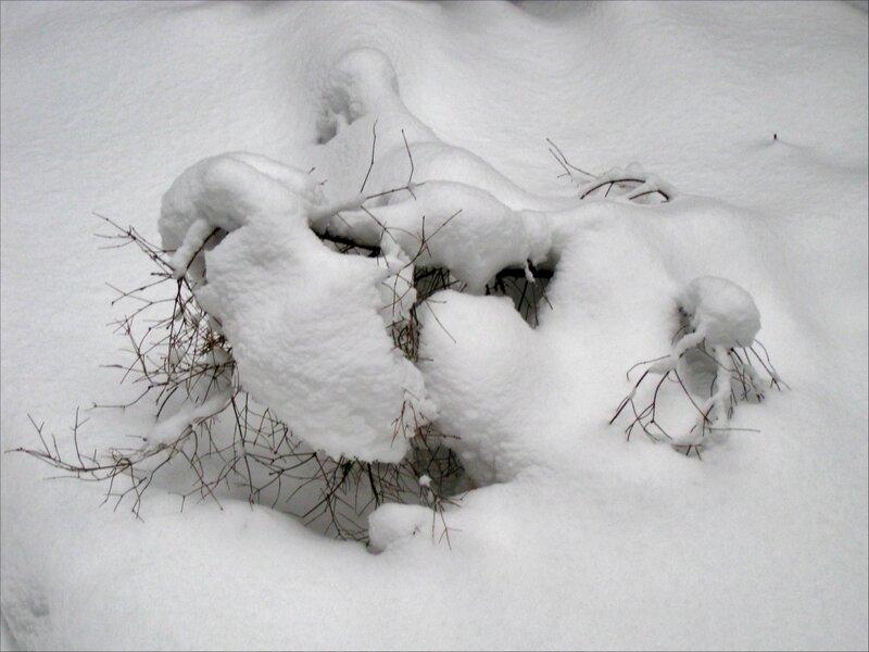 Укрытый снегом куст