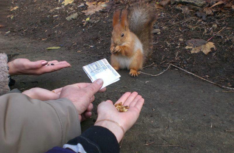 Белка выбирает орехи