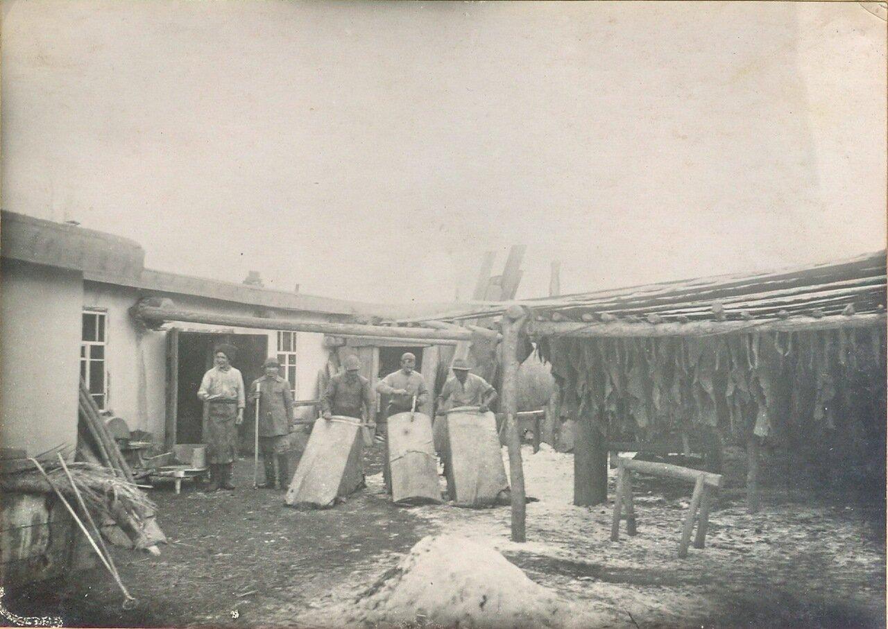 Сушильня кож и мездрение кож на кожевенном заводе Гимбицких. Пржевальск. 1914