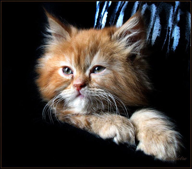 Фотограф Nateletro. Кошковое.