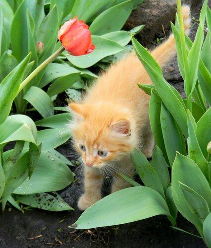 Его первая весна и первый в жизни дождь ...