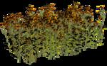 Lug_Grass_Flower (28).png