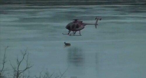 Спасение животных на тонком льду