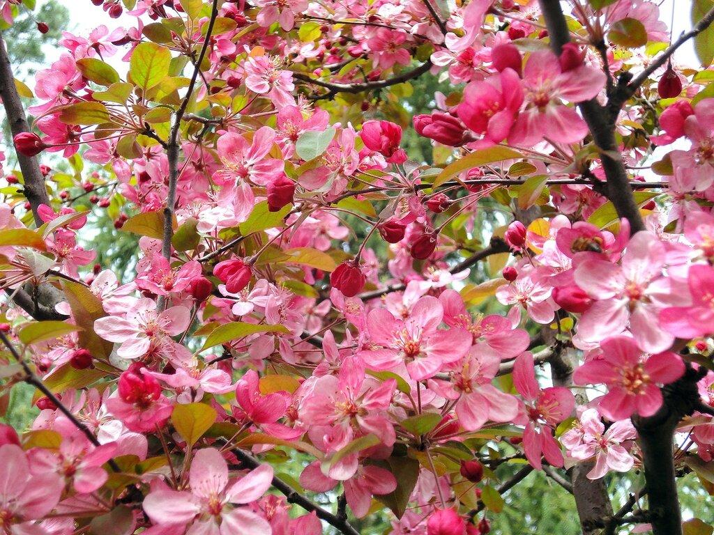 Обои Весна, цветение, влюбленные, цветы. Настроения foto 17