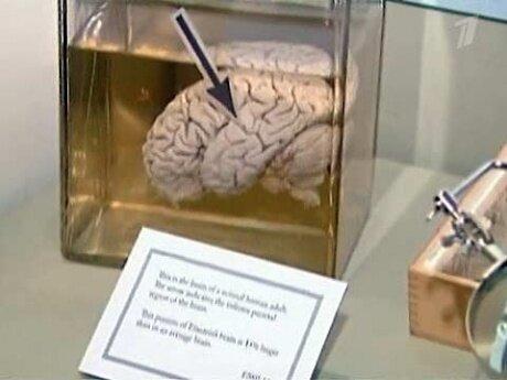 Человеческий мозг (04.04.2013)