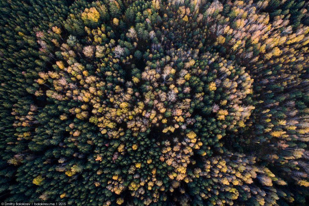 Осенний лес у Каолинового карьера (17.12.2015)