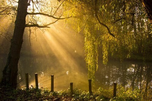 утренний свет...