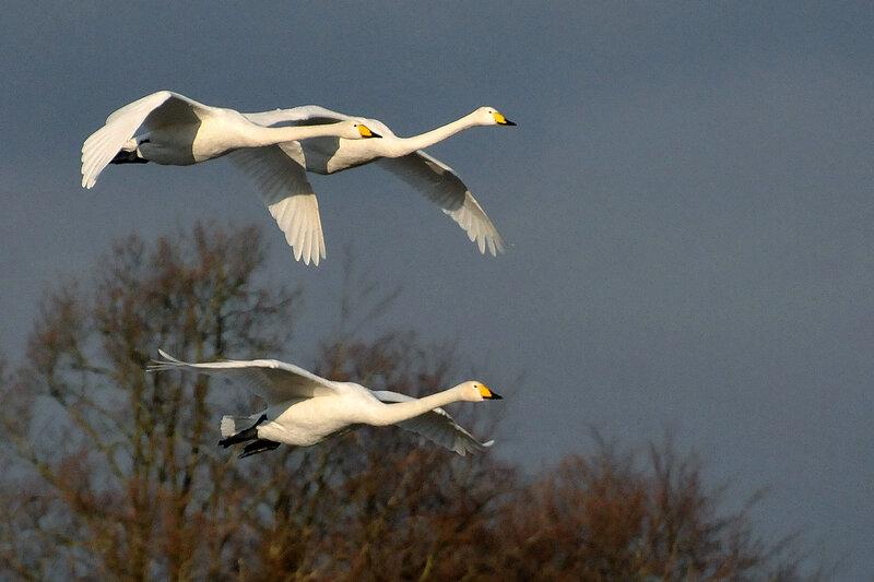 Будь я птицей, с ними улетела бы в те края, где вечное тепло!