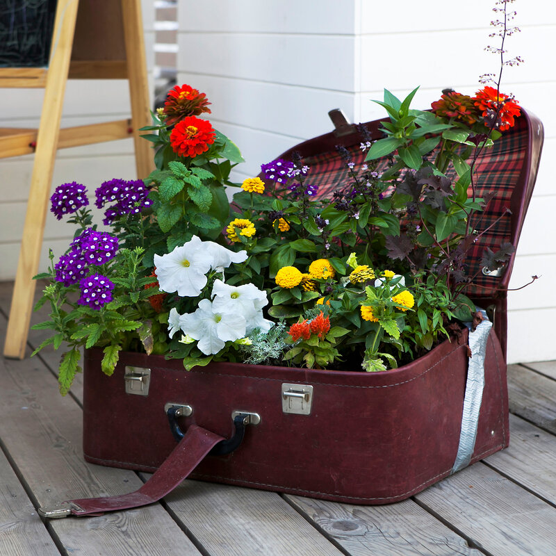 colorful Primulas and petunia in rattan suitcase on wooden flower as a decoaration of veranda