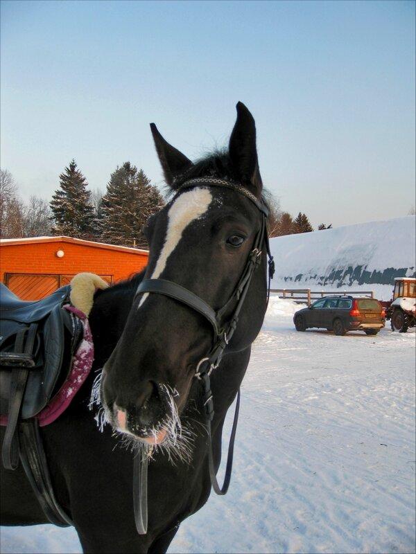 """Кубик около конюшни, КСК """"Славино"""""""