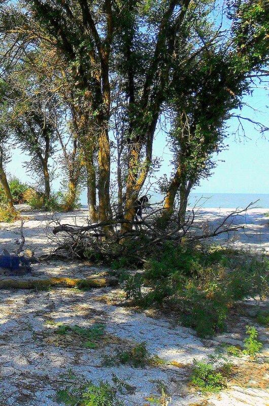 Деревья, море, велосипеды ... SAM_3349-1.JPG
