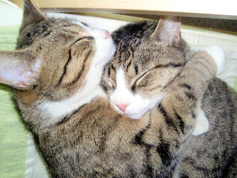 картинки люблю тебя обнимаю котики баня это