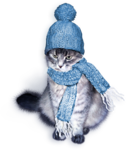 poes.png
