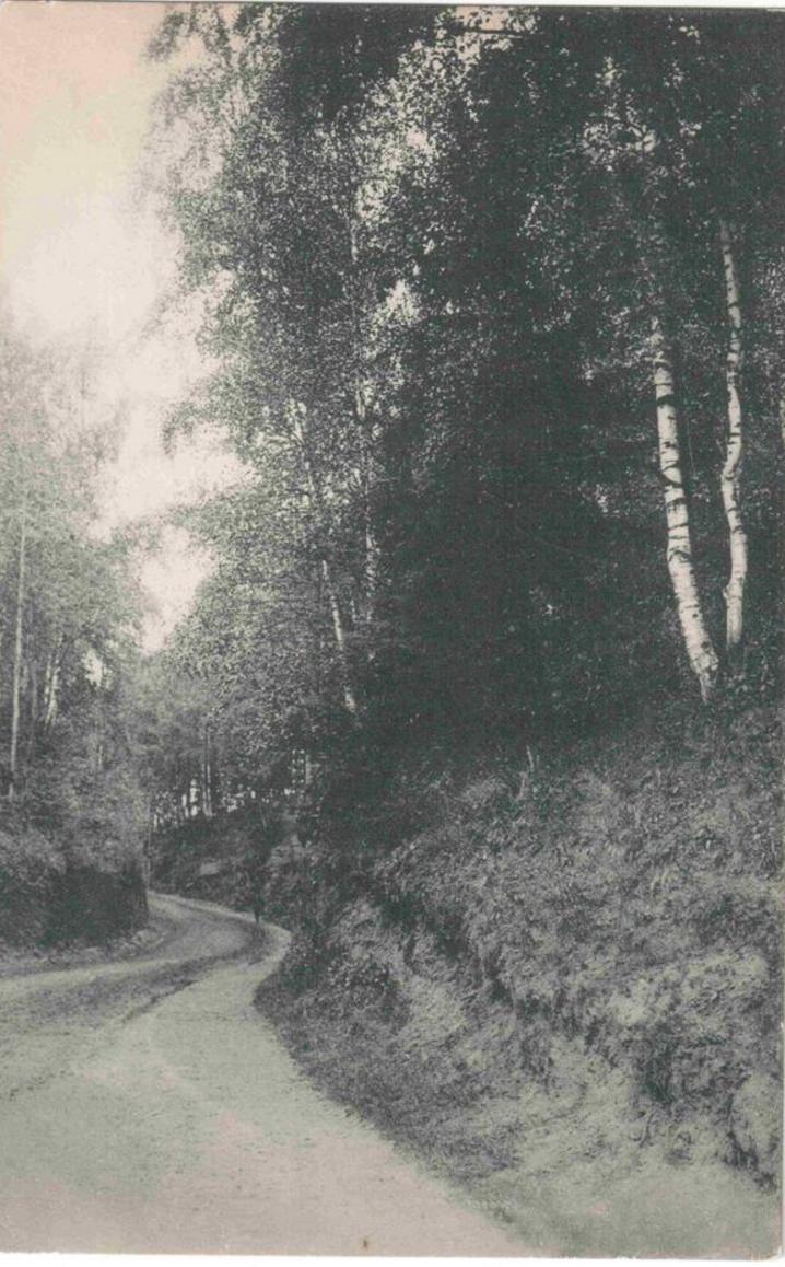 Дорога в Старосиверскую