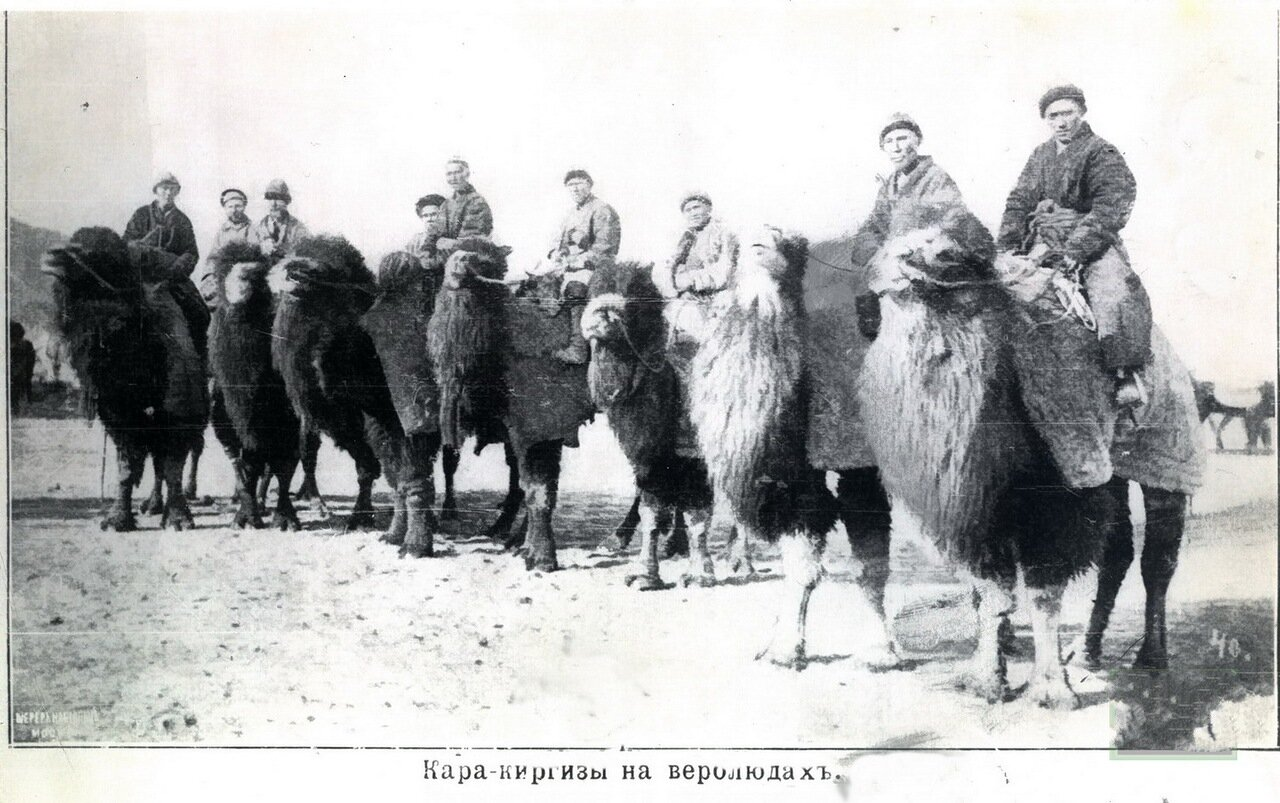 Всадники на верблюдах. 1910 год