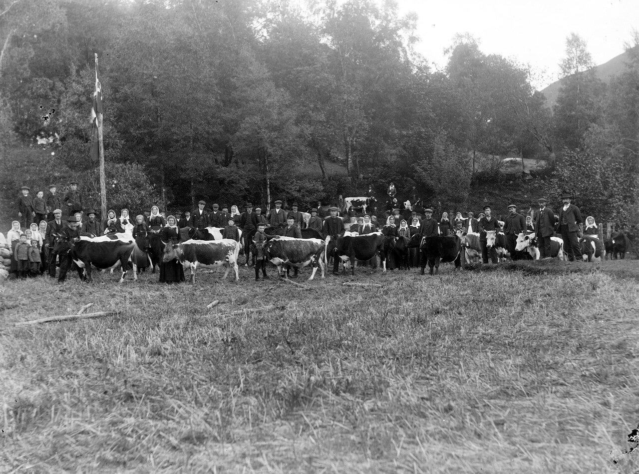 Ярмарка скота, ок. 1890-1910.