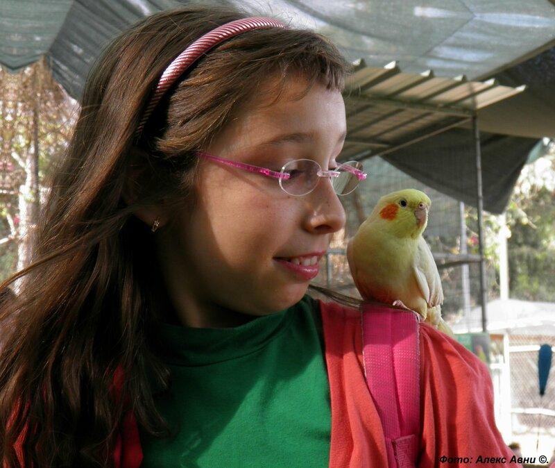 Аааа, и зеленый попугай..... (с)