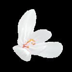 angelsdesigns_63.png