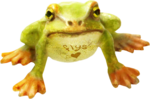 ldavi-wheretonowdreamer-loveflysfrog1a.png