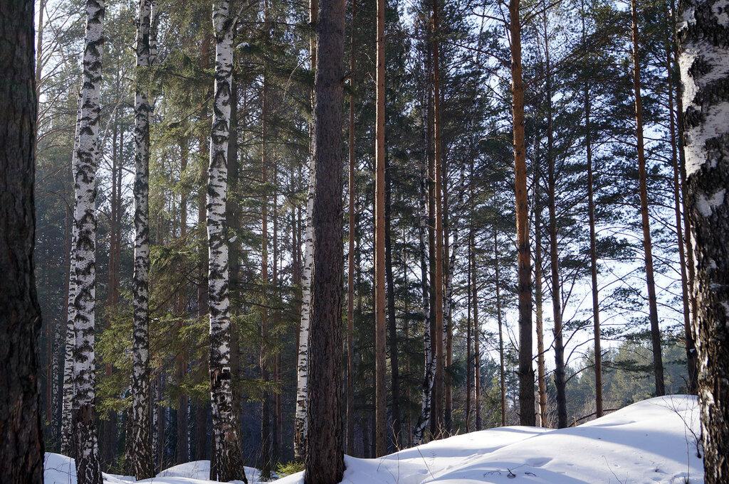 Златоуст. Лес за 5-м микрорайоном