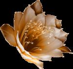 feli_gs_flower.png
