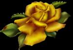 goldenrose1 copy.png