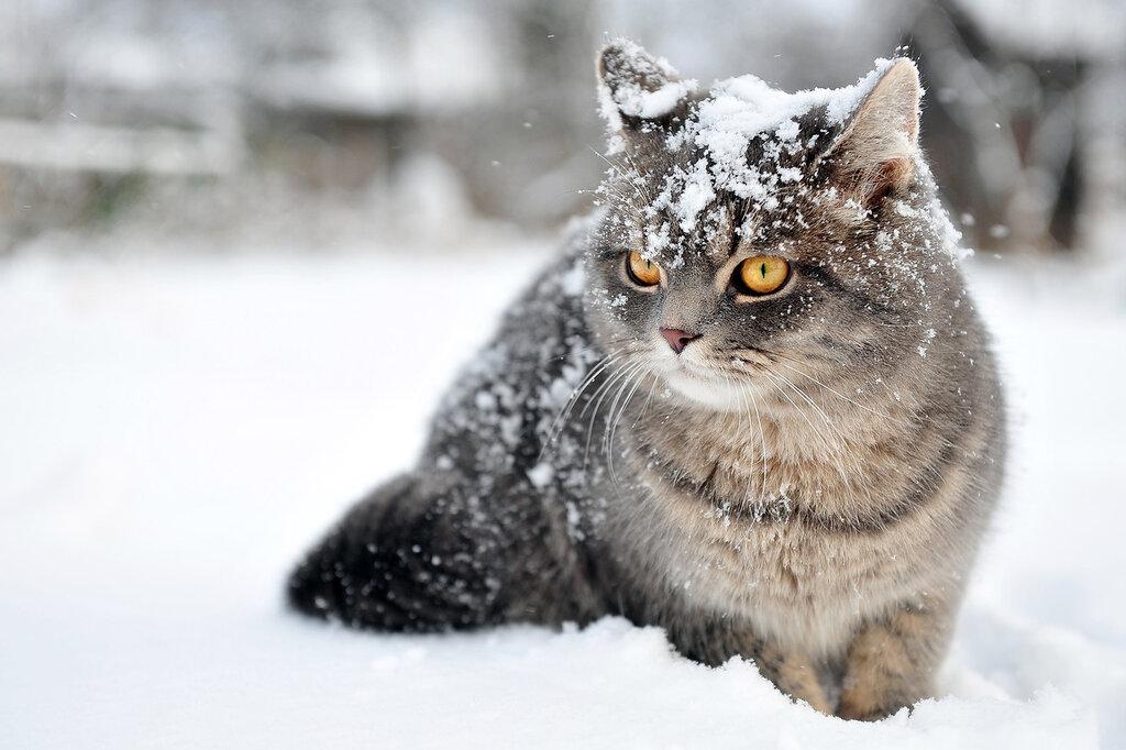 Зима, пока!