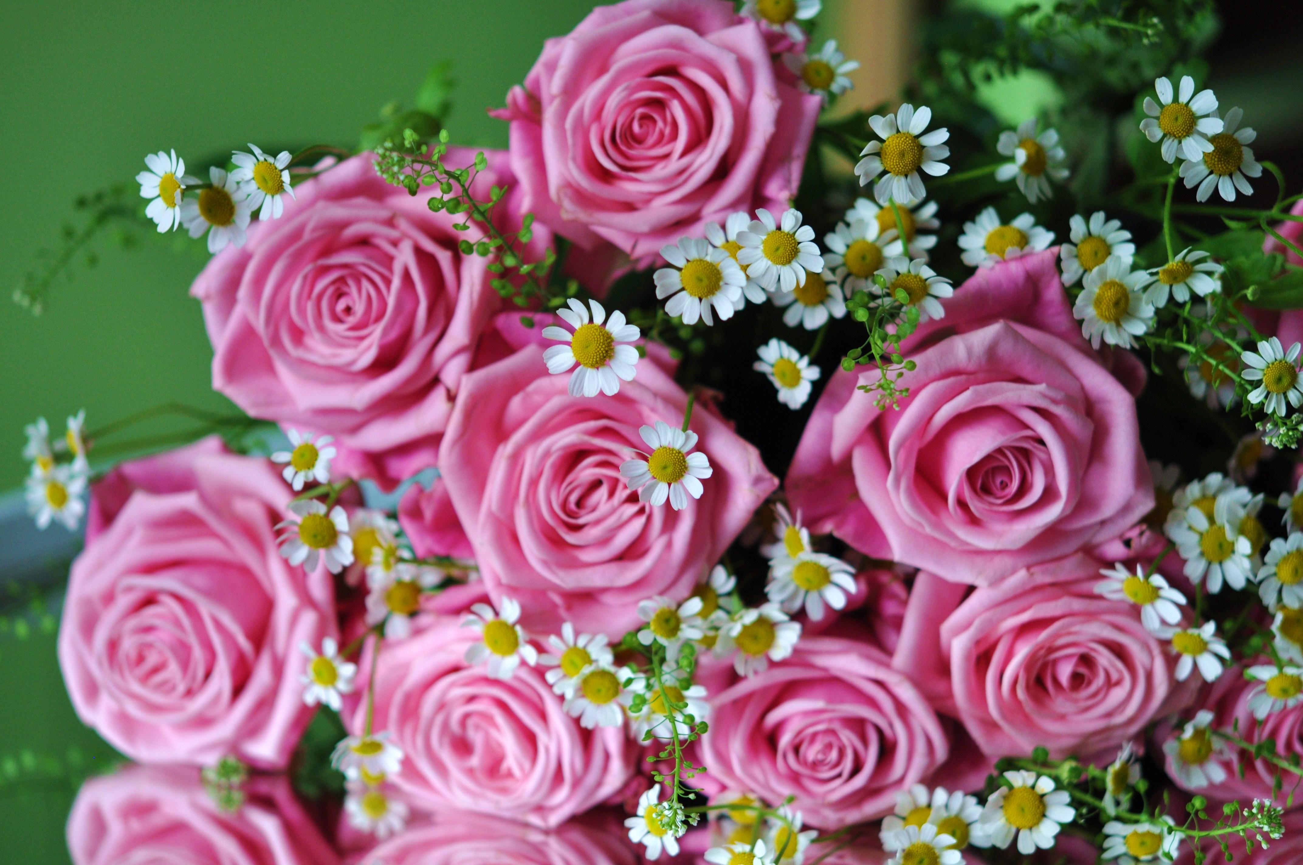 красивые открытки картинки фото цветов две недели лета