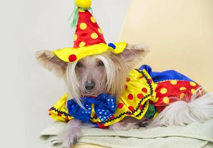 самая избалованная собака в мире