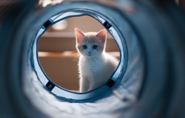 Нужна ли котенок в доме