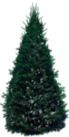 Holliewood_HollyJolly_Tree2a.png