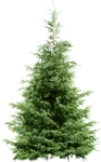 Holliewood_HollyJolly_Tree8.png