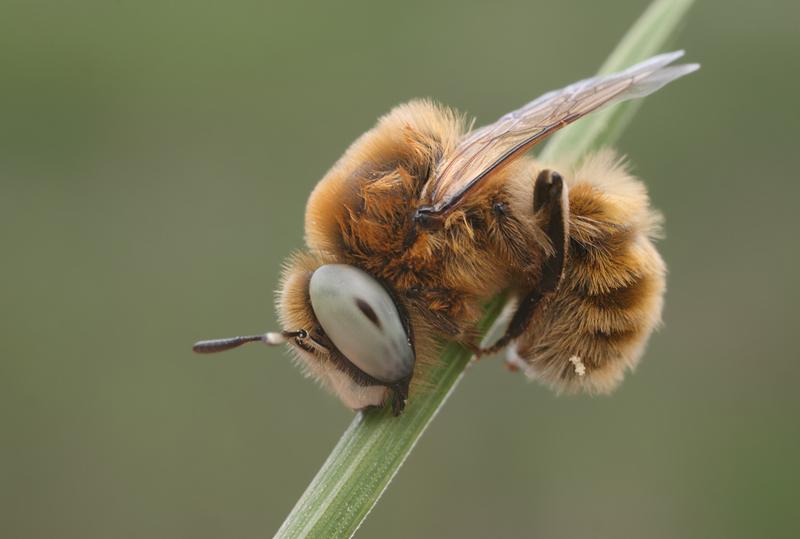 этом пользователи фото уставшей пчелки такое свадебное