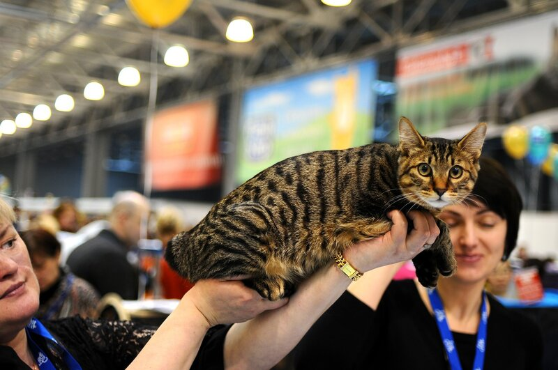Выставка котов