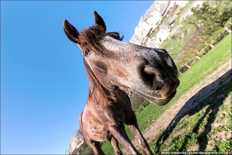 Лошади в Качи-Кальоне