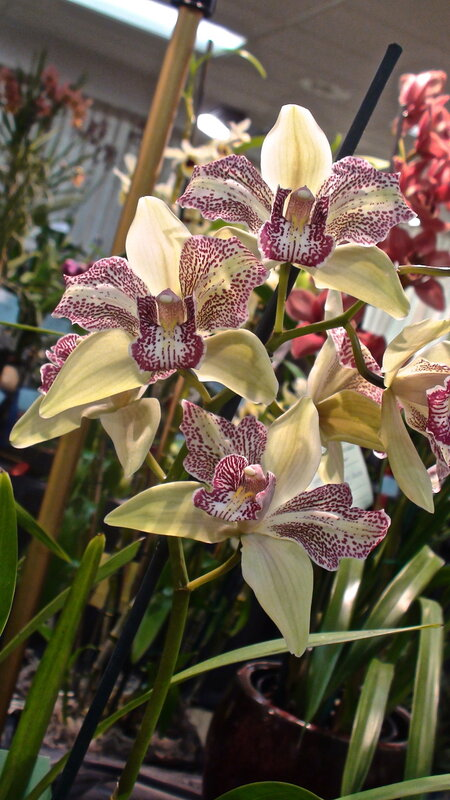 56th Peninsula Orchid Society Show & Sale