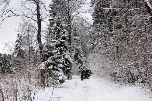 Прокат квадроциклов. Зима