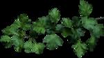 Листва и ветки деревьев. Клипарт