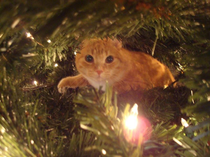 Коты на ёлке - фото 7