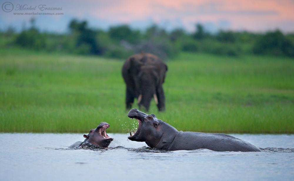 Animals by Morkel Erasmus