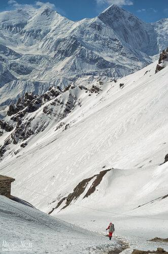 тропа в торонг-педи из high camp, горы, непал, гималаи, человек в горах, снежные пики