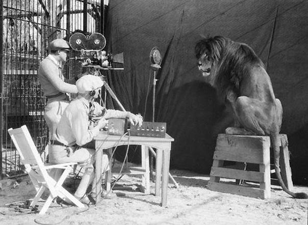 История льва из легендарной заставки Metro-Goldwyn-Mayer