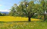 Spring (16).jpg