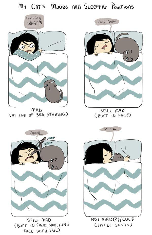 Смешные комиксы про котов на английском языке 0 c6da1 41c8f677 orig