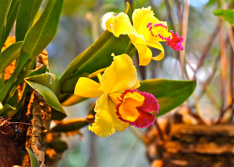 Фестиваль орхидей