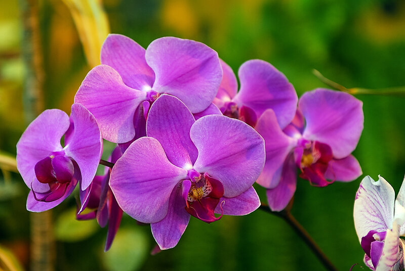 Орхидеи весной.