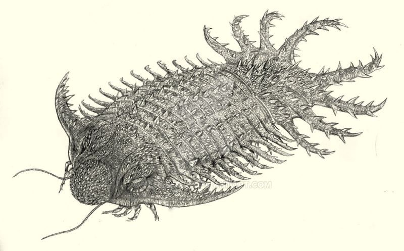 15. Euchambersia или Эучамберсия Эучамберсия — это тероцефал из надотряда therapsida, живший