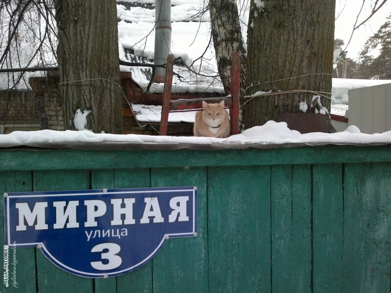 Злая собака на Мирной улице :)